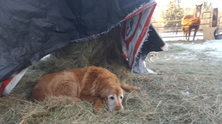 In the warm hay