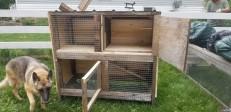 1st bunny house