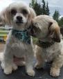 Danika & Yoshi